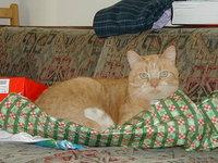 Christmas Tristan